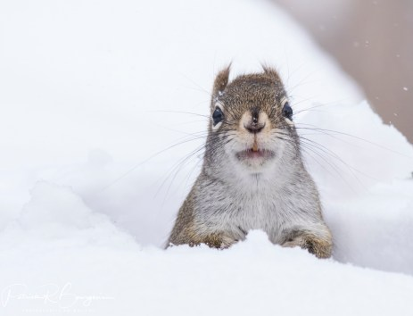 écureuil2 (1 sur 1)