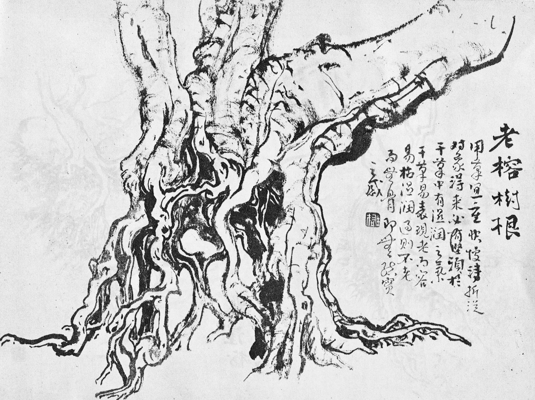 Ficus microcarpa and Ficus macrophylla