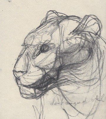 Panther (sold) 30x45cm charcoal on paper ©2013