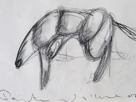Panther study 21x30cm charcoal on paper ©2006