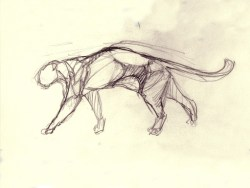 Panther study 40x30cm crayon on paper ©2003