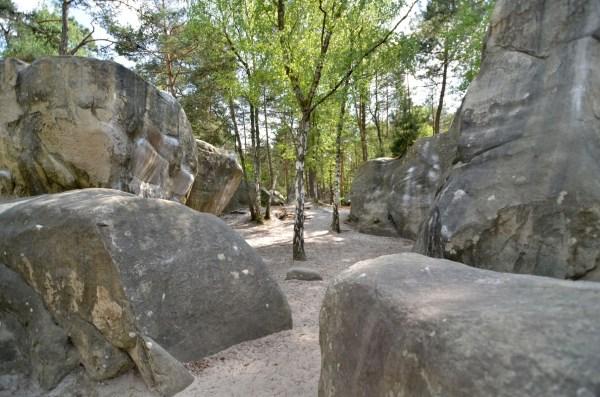Bienvenue Fontainebleau Patrick Wenz