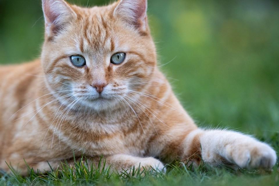 cat_xt4_200
