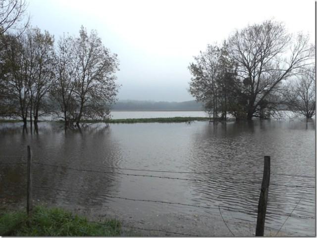 Le Thouet ou la Loire en crue à Artannes-sur-Thouet (49) 3