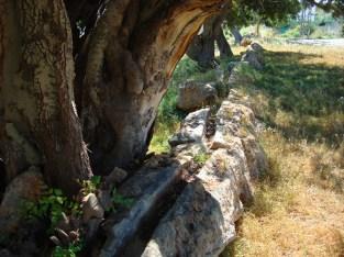 Aqüeducte de s'Argamassa dsc02847-800