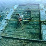 El calendario para la extracción del barco fenicio de Mazarrón se fijará en febrero