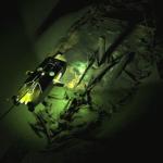 'Nunca se había visto nada parecido', dicen los científicos que descubrieron un mundo perdido de naufragios