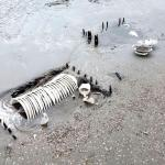 Fabulosos restos de un naufragio en Tierra del Fuego: aparecen cientos de tazas y platos en la costa