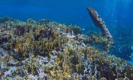Hallan en Quintana Roo un velero que data de finales siglo XVIII