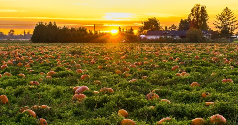 Fall Pumpkin Patch - Family Fun Activities