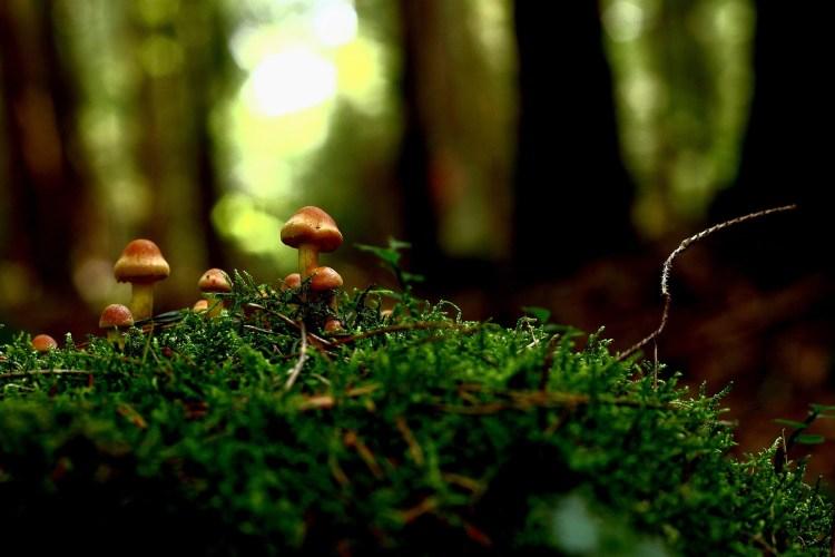 mushroom-2016277_1920