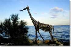 5 - giraffa