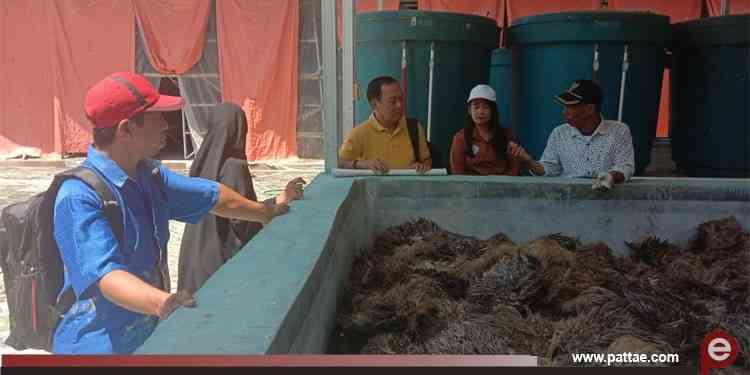Pemanfaatan limbah sawit warga Desa Pakava, Pasangkayu, Sulawesi Barat (1)
