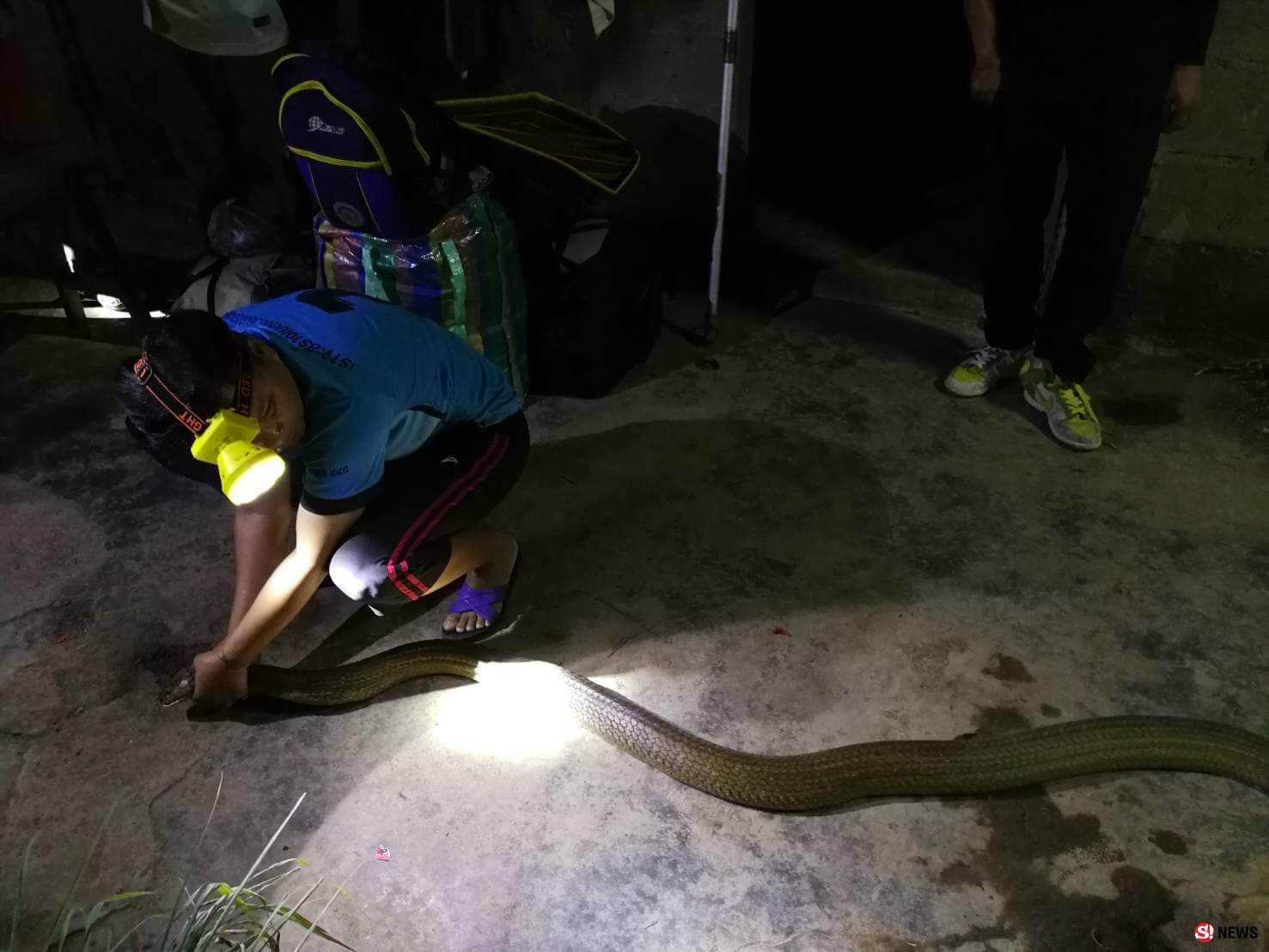 Beware of King Cobra's entering your home from December to February.