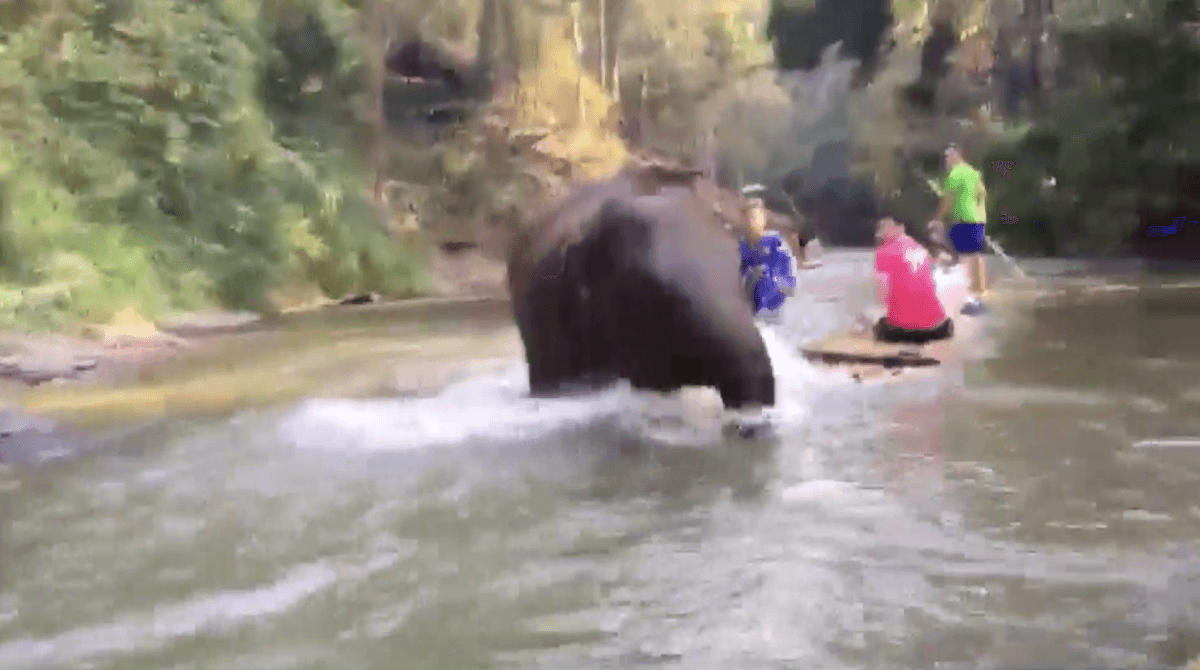 Baby elephant calf runs into tourist raft in Chiang Mai