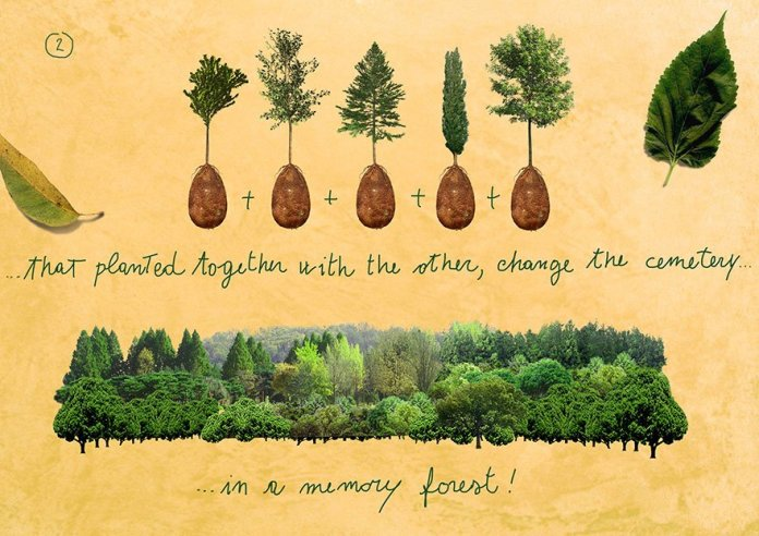 Coffins Organic Burial Pods Trees Loved Ones