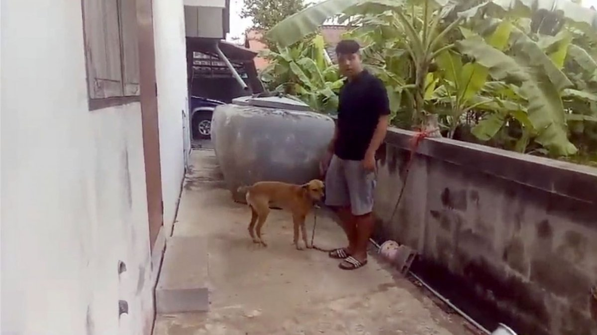 Chaiyaphum girl, age 4, dies from mauling by three local dogs