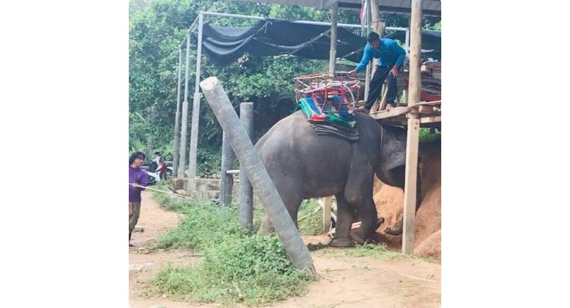 Canadian tourist injured after she falls from elephant ride
