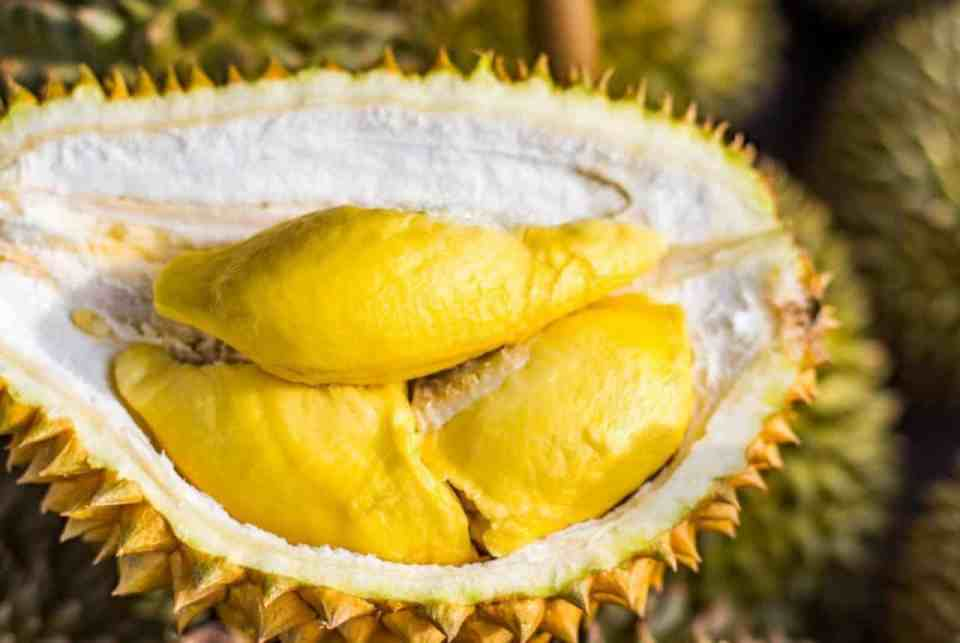 Smell of durian prompts evacuation of Australian university. There's a reason why durian is forbidden in hotels and on the MRT, even in countries where the