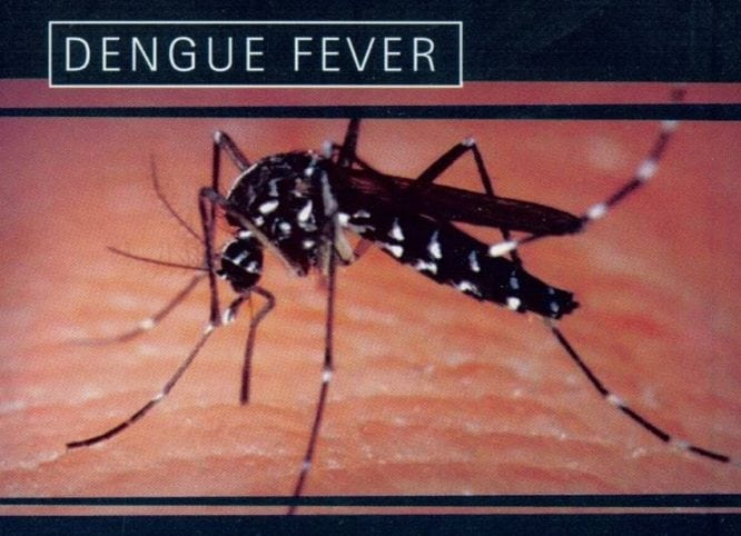 Thailand provinces warned about dengue fever spread
