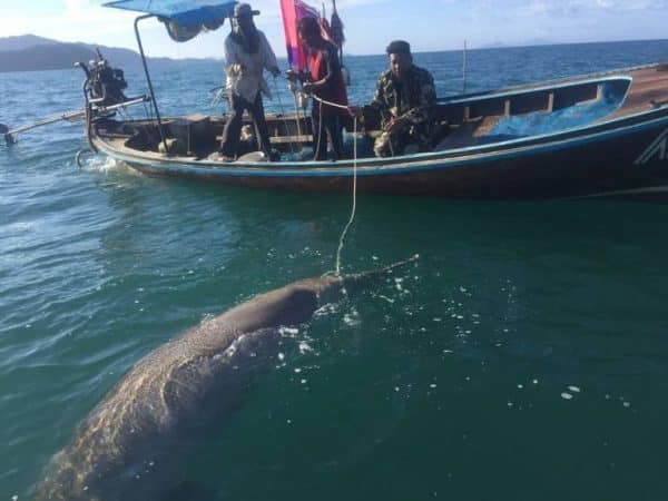 Renewed calls for stricter control of illegal fishing equipment