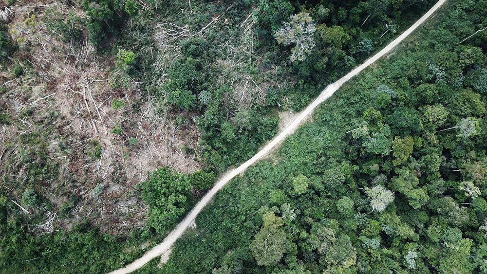 Is the Amazon forest really the 'the lungs of the planet'?