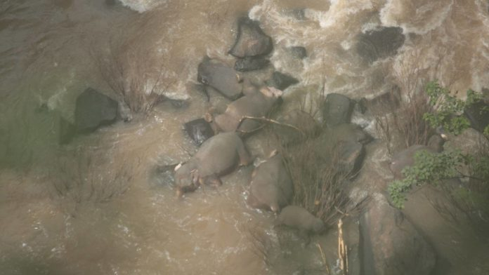 Five more dead elephants found in Thai park, taking toll to 11