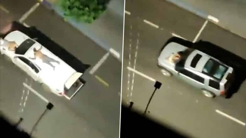 Brazilian bank robbers hostages human shields tying them cars during heists
