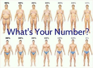 body-fat-percentages