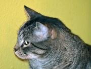 bubba profile