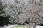 crepe myrtle tree backyard
