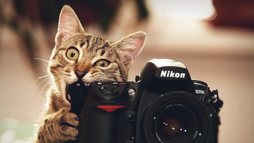 cat-nikon-camera-photographer-nikon-d700-lens-animals