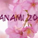Hanami w kraju kwitnących wiśni