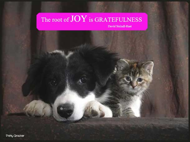 Motivational quote with cute puppy and kitten