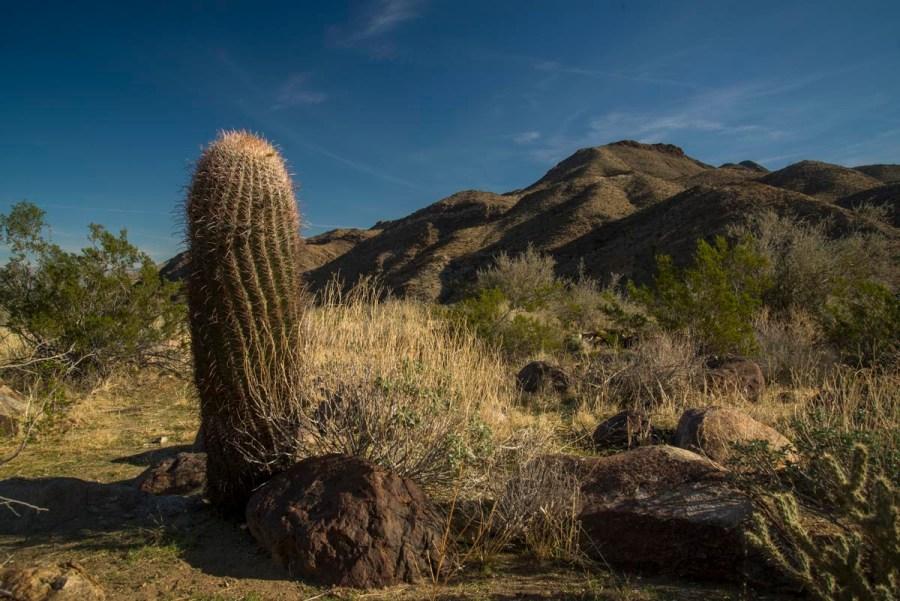 Indian Canyon Cactus