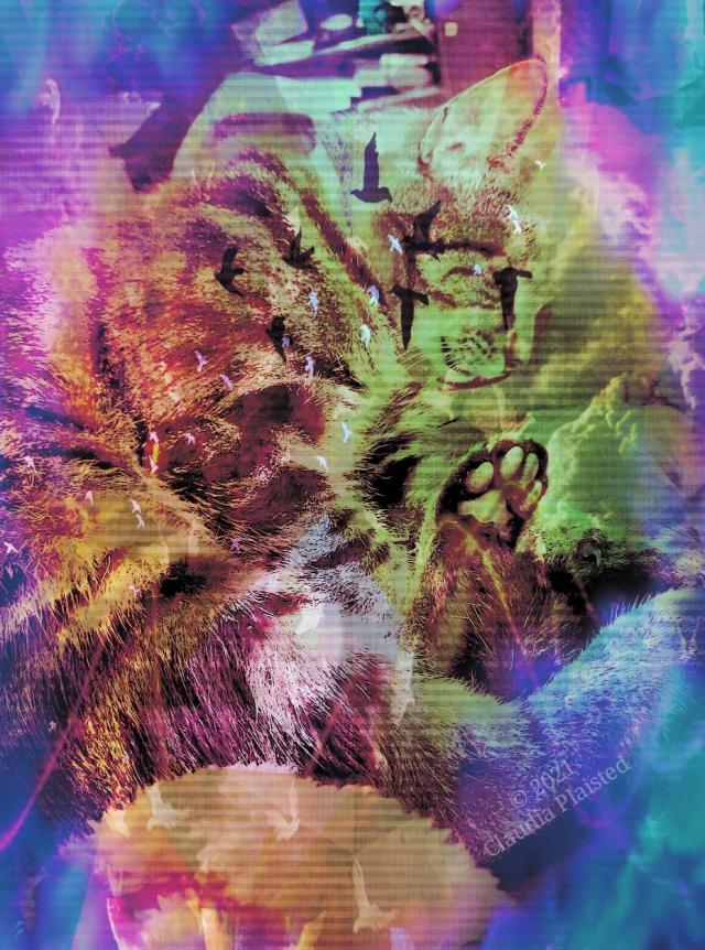 An abstract image of a tabby cat, curled up with its toes visible to the camera. The image is overlaid with pink, blue, and amber colors, washing out the cat's natural colors. Silhouettes of flying birds also overlay the image, adding to the the surreal feeling.