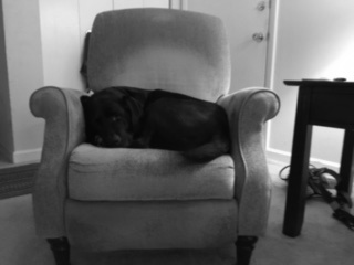 Campbell asleep in his arm chair.