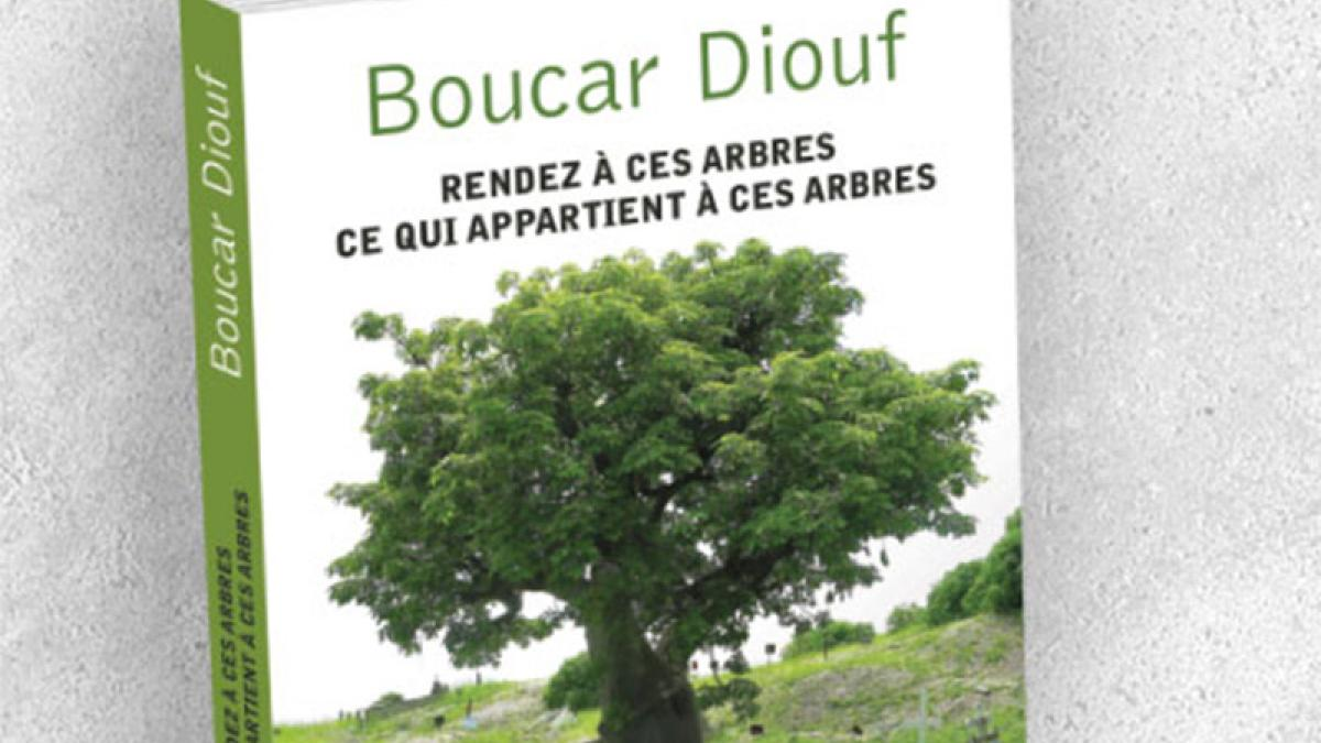 Boucar Diouf «Rendez à ces arbres ce qui appartient à ces arbres»