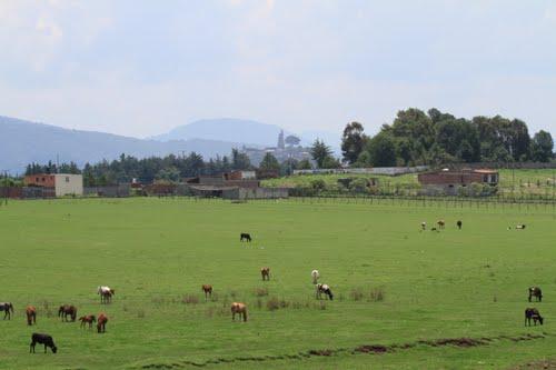 Jaracuaro (2)