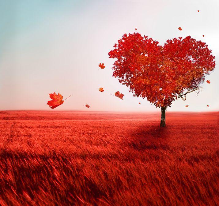 el-arbol-del-amor-love-tree-14-de-febrero-san-valentin-postales-día-del-amor-y-la-amistad