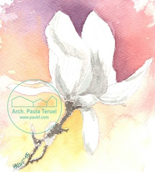 magnolia flor flores paukf pkf watercolor dibujo ilustración acuarela drawing