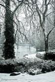 Pond from Garden