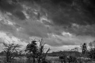Random landscape in Littlebury