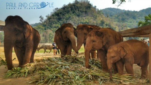 elephant exploitation paul and carole the year we went to mars 2017