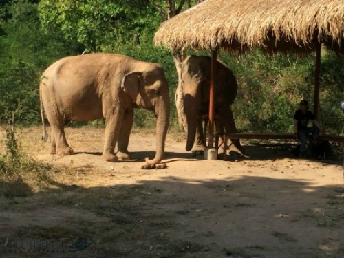 Thailand #elephant #sanctuary #thai #food #cruising #cruise #port #review #information #kohsamui #samui #nathon #thailand #marella #discovery #cruiseship