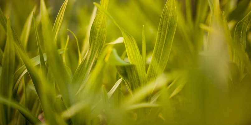 Nature-Photography-Grass