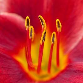 Center of a Flower | Flower Photography