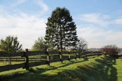 Eine grüne Landschaft aus Wiesen und Fischteichen umringt das Grundstück