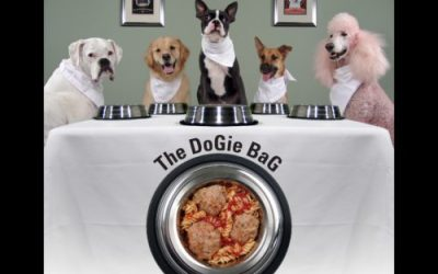 Vets Fooled by the Pet Food Industry – why pets get sick eating commercial diets