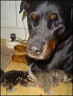 Larissa tar hand om små kattungar